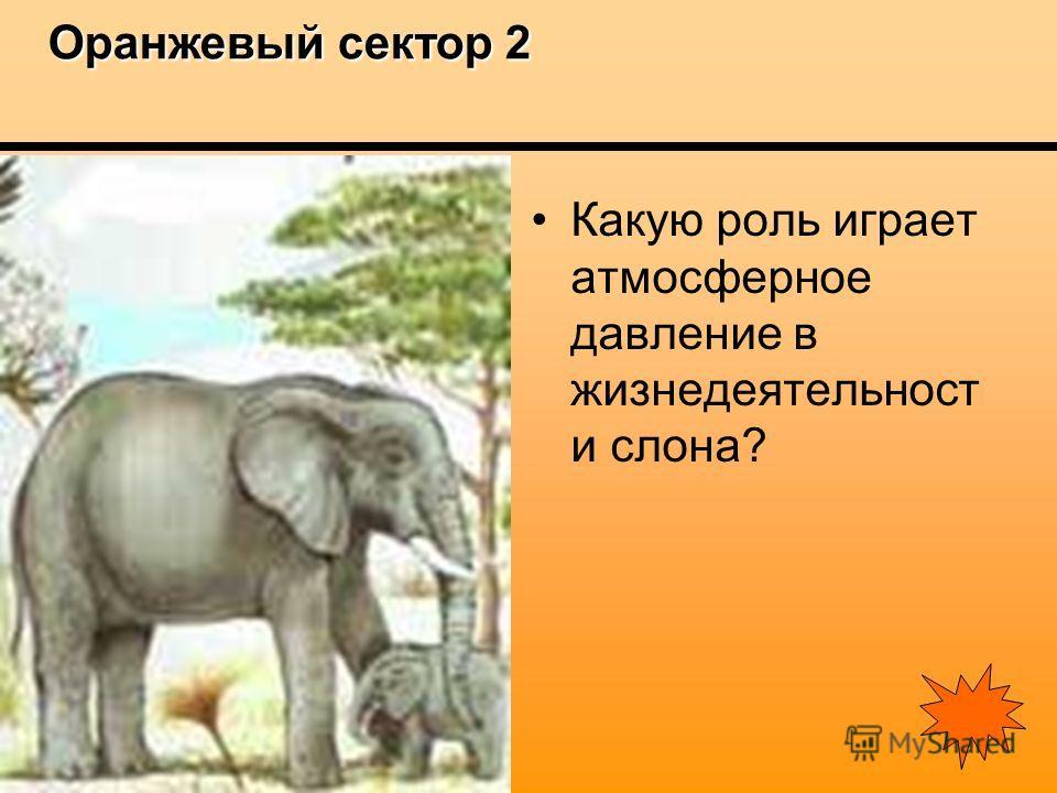 Оранжевый сектор 2 Оранжевый сектор 2 Какую роль играет атмосферное давление в жизнедеятельност и слона?