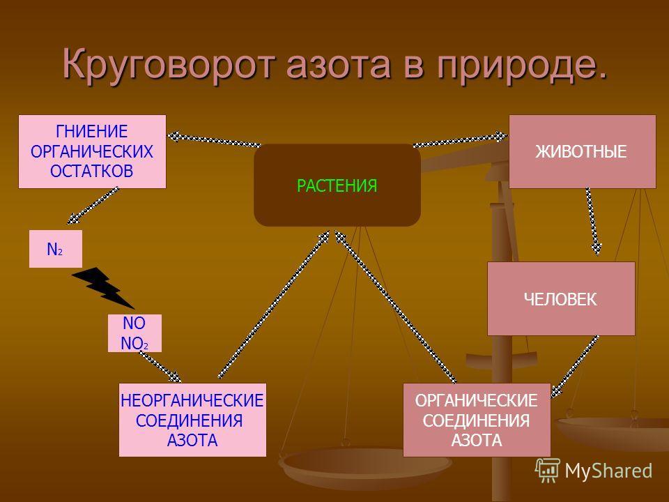 Круговорот азота в природе. РАСТЕНИЯ НЕОРГАНИЧЕСКИЕ СОЕДИНЕНИЯ АЗОТА ОРГАНИЧЕСКИЕ СОЕДИНЕНИЯ АЗОТА ЧЕЛОВЕК ЖИВОТНЫЕ ГНИЕНИЕ ОРГАНИЧЕСКИХ ОСТАТКОВ N2N2 NO NO 2