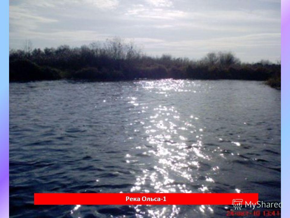 Река Ольса-1