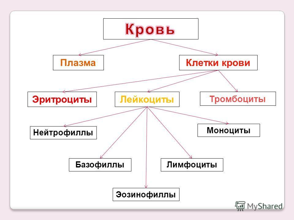 ПлазмаКлетки крови ЭритроцитыЛейкоциты Тромбоциты Нейтрофиллы Базофиллы Эозинофиллы Лимфоциты Моноциты