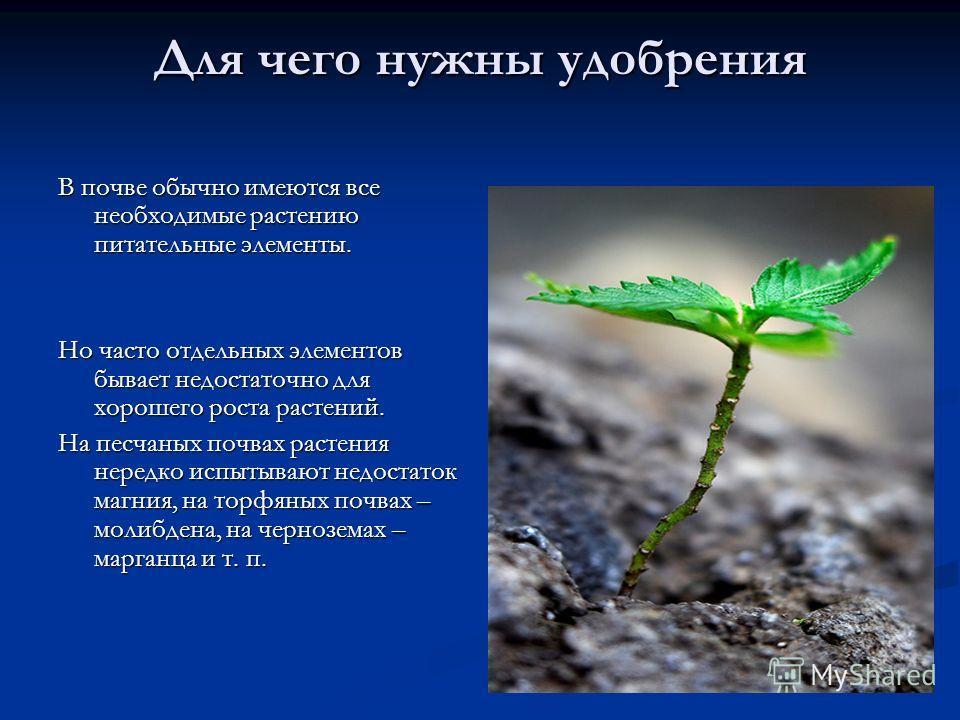 Для чего нужны удобрения В почве обычно имеются все необходимые растению питательные элементы. Но часто отдельных элементов бывает недостаточно для хорошего роста растений. На песчаных почвах растения нередко испытывают недостаток магния, на торфяных