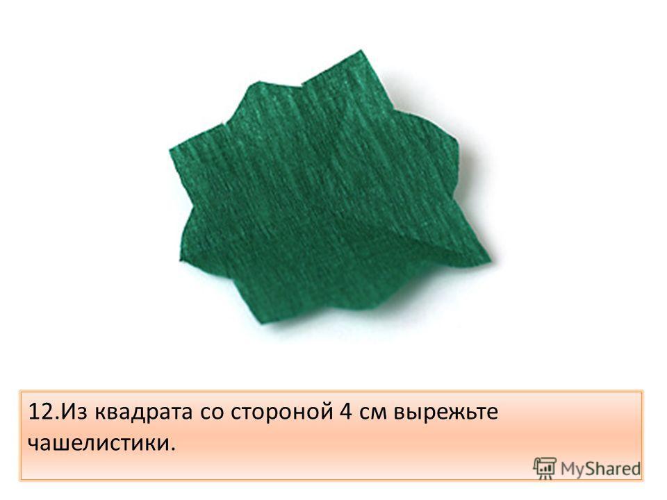 12.Из квадрата со стороной 4 см вырежьте чашелистики.