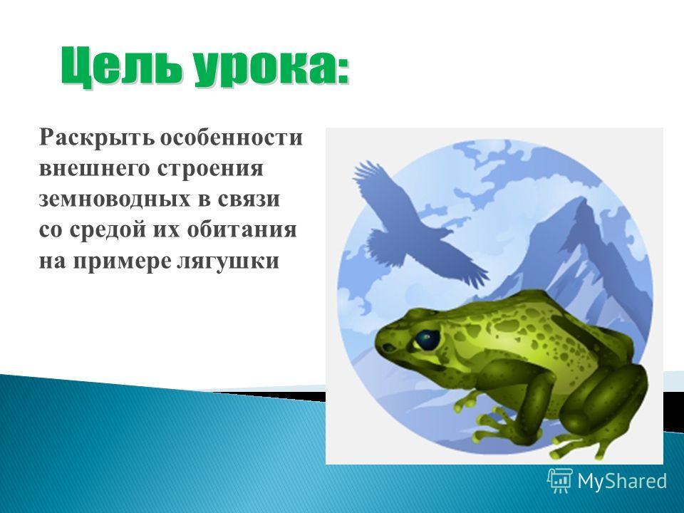 Раскрыть особенности внешнего строения земноводных в связи со средой их обитания на примере лягушки