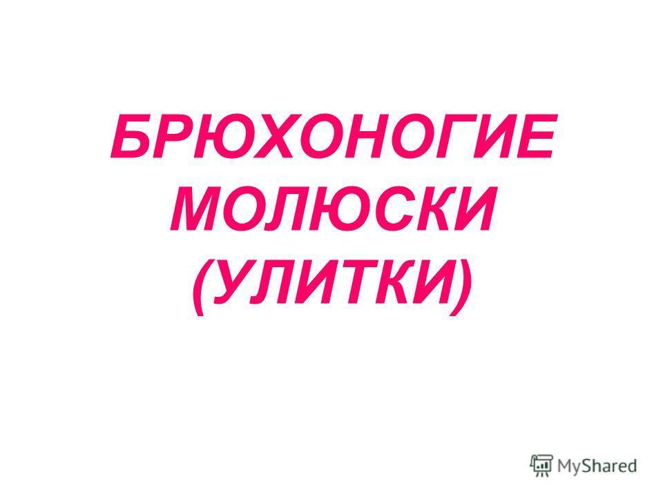 БРЮХОНОГИЕ МОЛЮСКИ (УЛИТКИ)