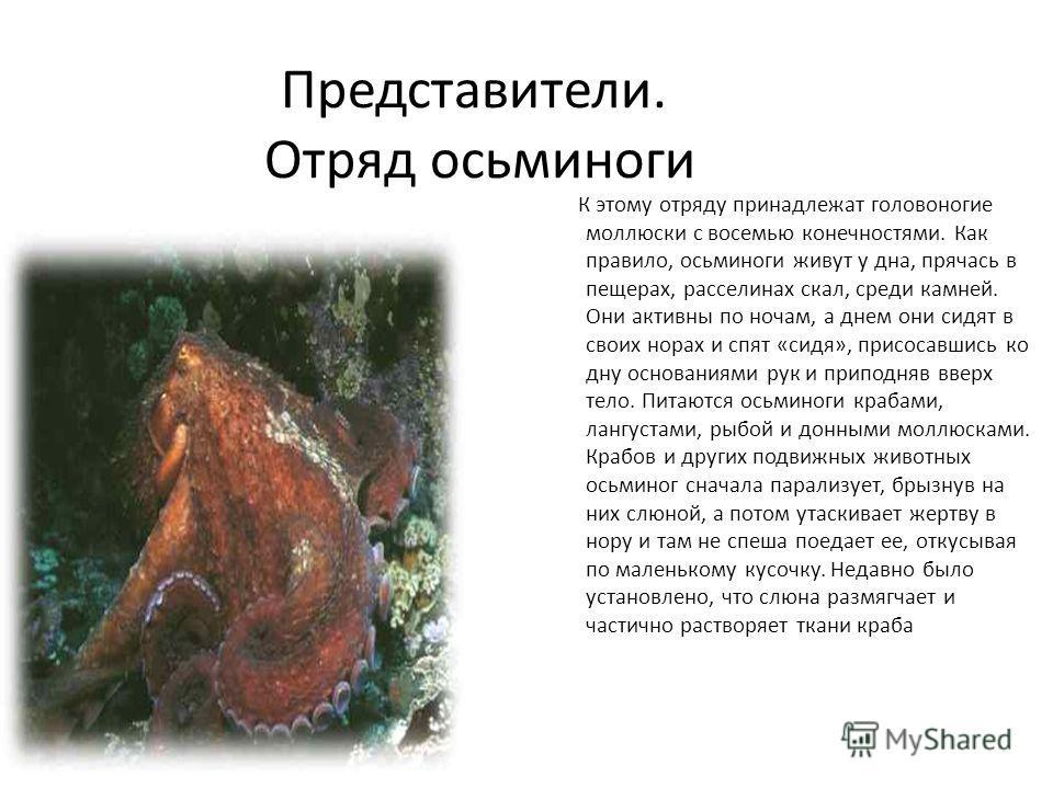 Представители. Отряд осьминоги К этому отряду принадлежат головоногие моллюски с восемью конечностями. Как правило, осьминоги живут у дна, прячась в пещерах, расселинах скал, среди камней. Они активны по ночам, а днем они сидят в своих норах и спят «