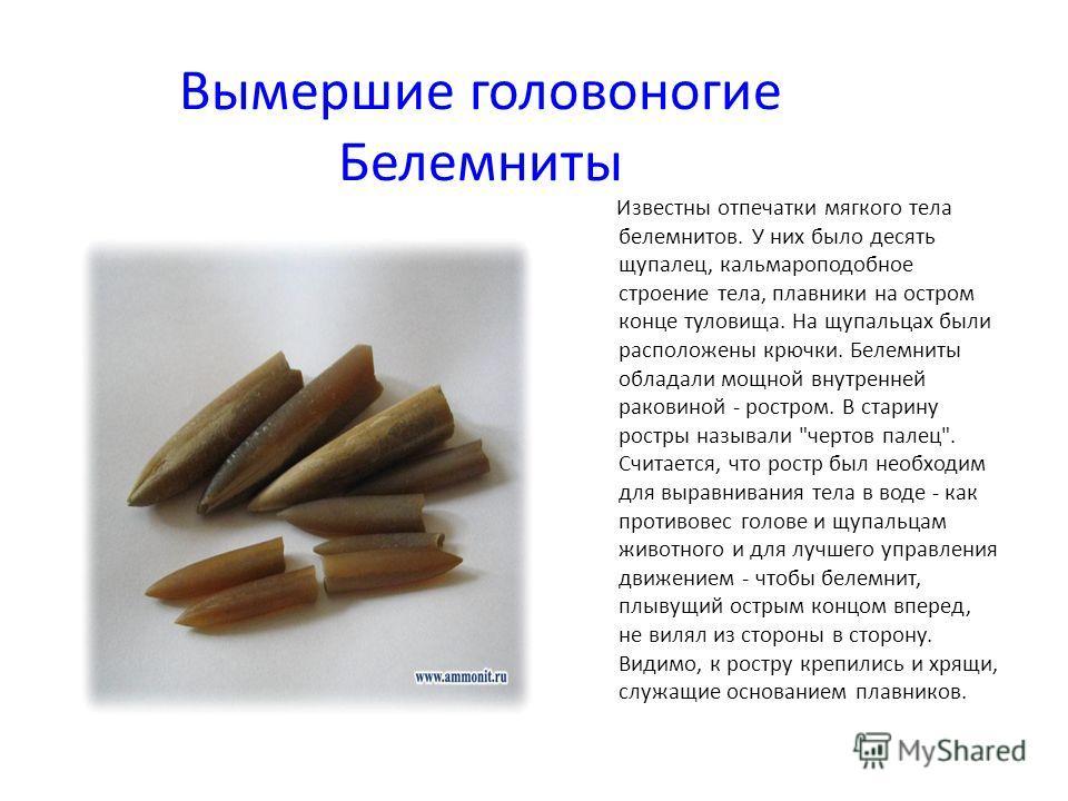 Вымершие головоногие Белемниты Известны отпечатки мягкого тела белемнитов. У них было десять щупалец, кальмароподобное строение тела, плавники на остром конце туловища. На щупальцах были расположены крючки. Белемниты обладали мощной внутренней ракови