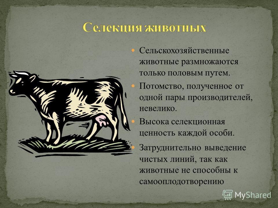 Сельскохозяйственные животные размножаются только половым путем. Потомство, полученное от одной пары производителей, невелико. Высока селекционная ценность каждой особи. Затруднительно выведение чистых линий, так как животные не способны к самооплодо