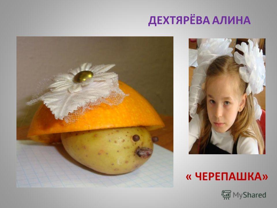 ДЕХТЯРЁВА АЛИНА « ЧЕРЕПАШКА»
