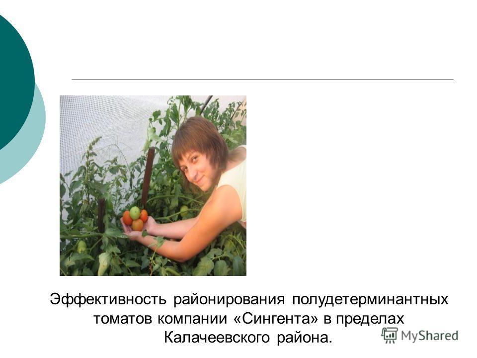 Эффективность районирования полудетерминантных томатов компании «Сингента» в пределах Калачеевского района.