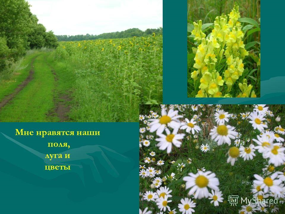 Мне нравятся наши поля, луга и цветы