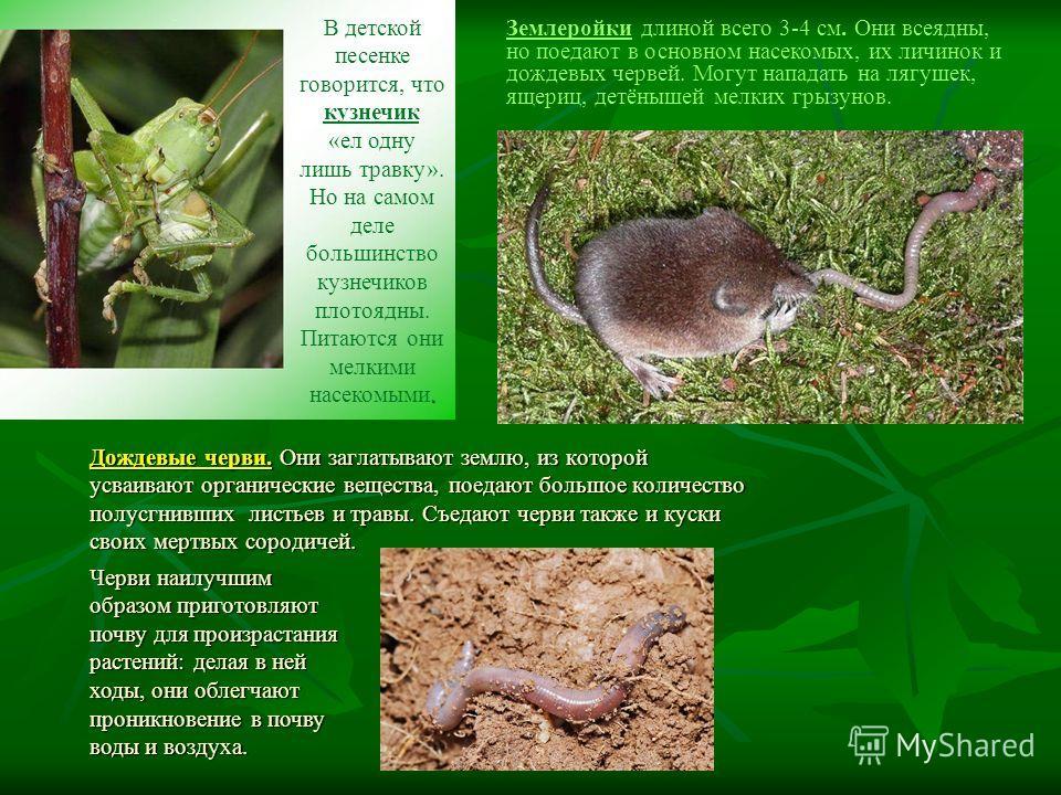Землеройки длиной всего 3-4 см. Они всеядны, но поедают в основном насекомых, их личинок и дождевых червей. Могут нападать на лягушек, ящериц, детёнышей мелких грызунов. Дождевые черви. Они заглатывают землю, из которой усваивают органические веществ