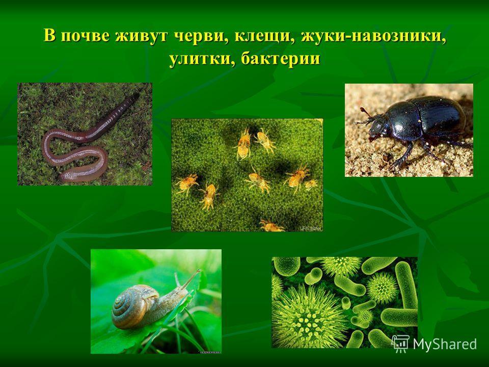 В почве живут черви, клещи, жуки-навозники, улитки, бактерии