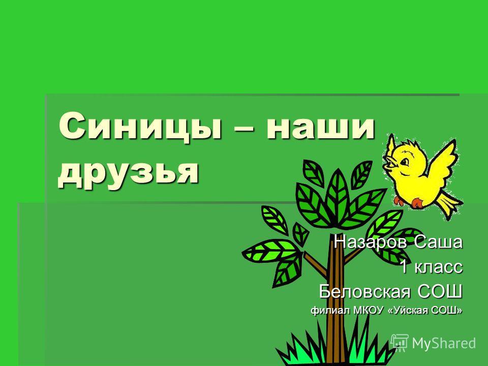 Синицы – наши друзья Назаров Саша 1 класс Беловская СОШ филиал МКОУ «Уйская СОШ»
