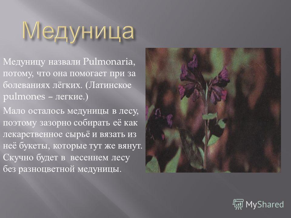 Прострел – будто маленький мохнатый зверёк. Длинные шелковистые волоски щедро покрывают и стебелёк этого растения, и разрезанные на тоненькие дольки листья, и даже наружную сторону цветка. Растение находится под охраной.