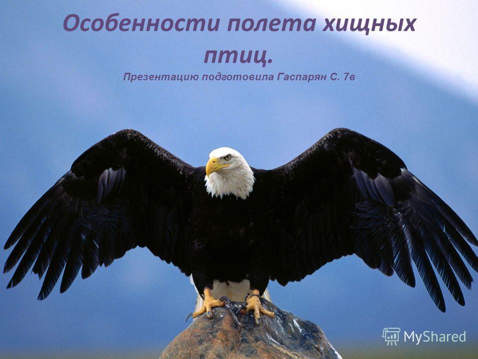 Особенности полета хищных птиц. Презентацию подготовила Гаспарян С. 7в