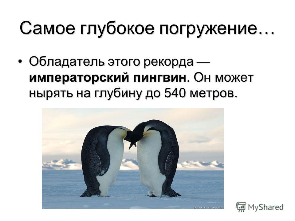 Самое глубокое погружение… Обладатель этого рекорда императорский пингвин. Он может нырять на глубину до 540 метров.Обладатель этого рекорда императорский пингвин. Он может нырять на глубину до 540 метров.