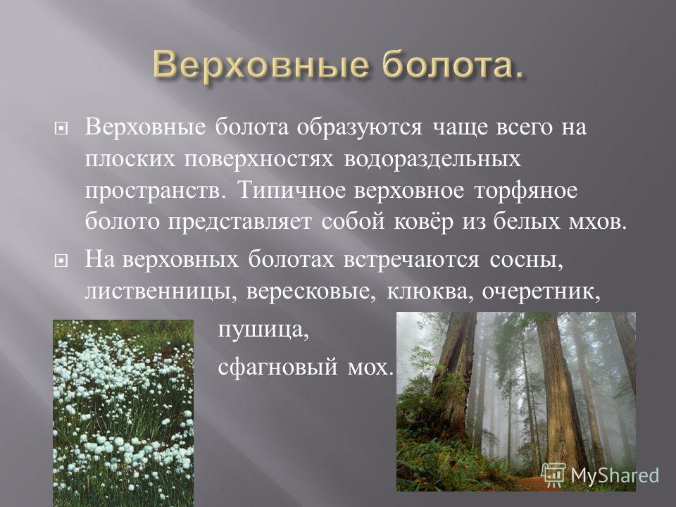 Верховные болота образуются чаще всего на плоских поверхностях водораздельных пространств. Типичное верховное торфяное болото представляет собой ковёр из белых мхов. На верховных болотах встречаются сосны, лиственницы, вересковые, клюква, очеретник,