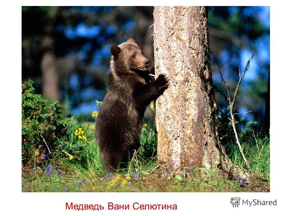 Медведь Вани Селютина