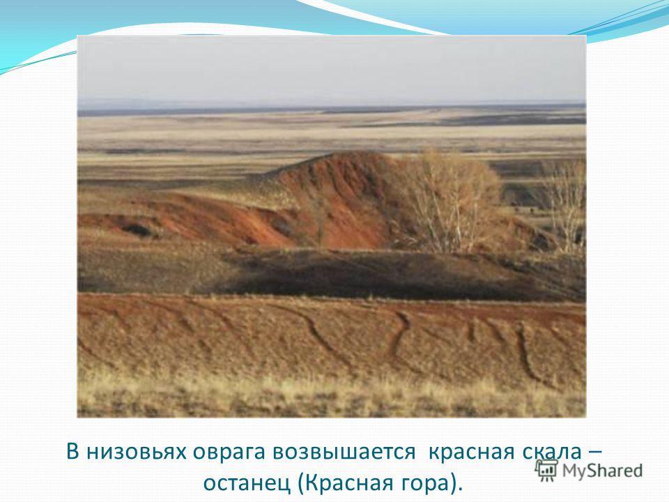 В низовьях оврага возвышается красная скала – останец (Красная гора).