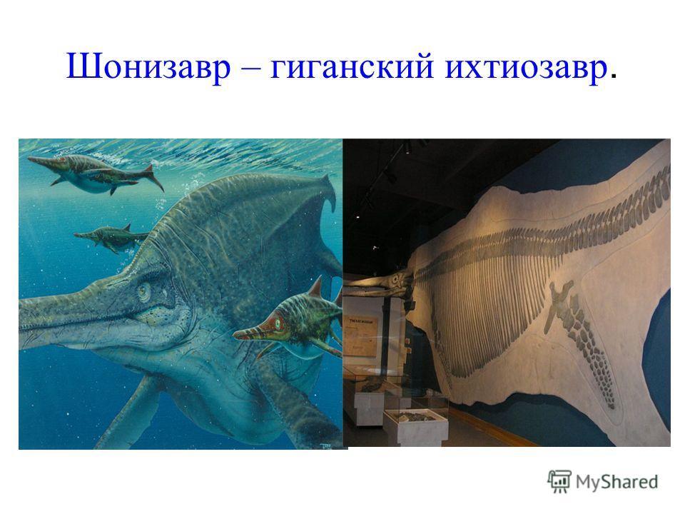 Шонизавр – гиганский ихтиозавр.