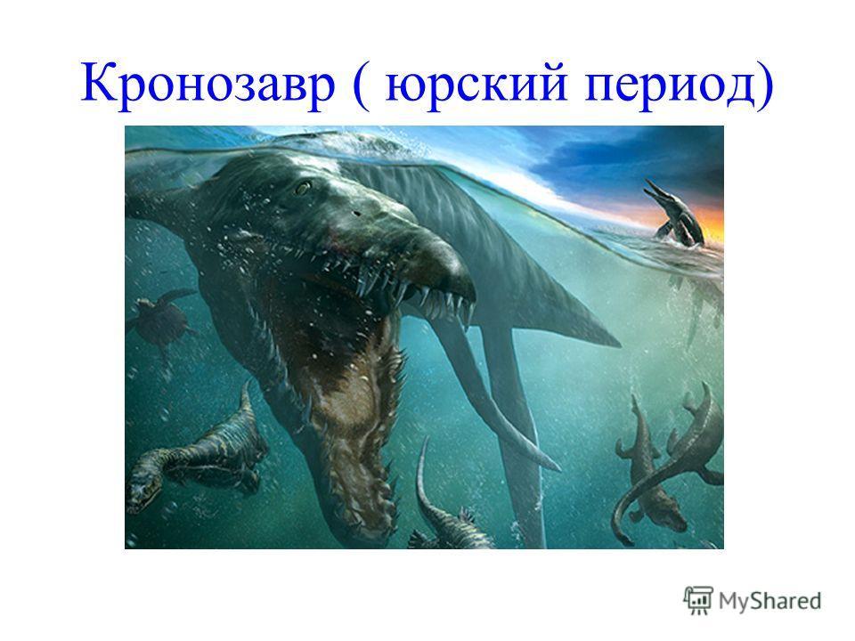 Кронозавр ( юрский период)