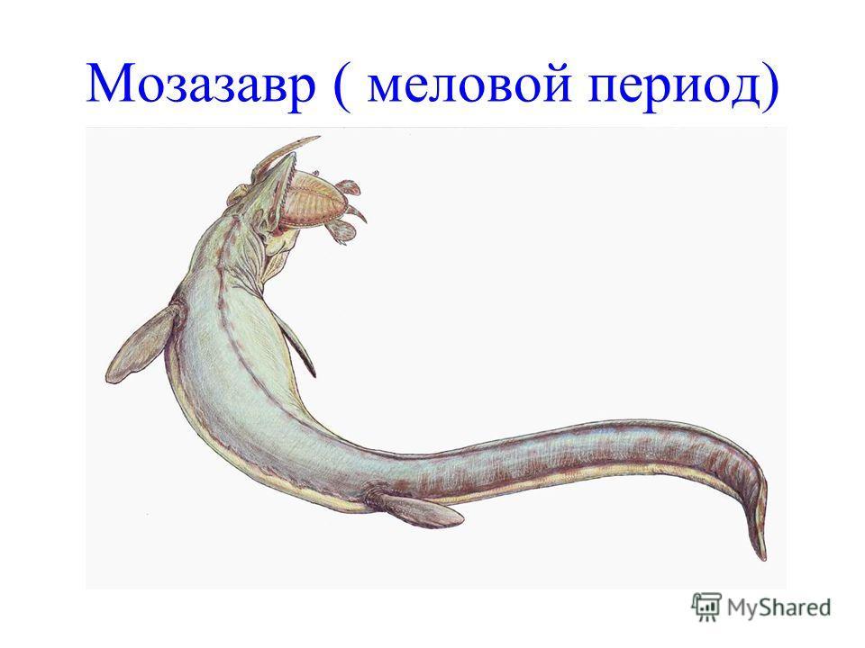 Мозазавр ( меловой период)