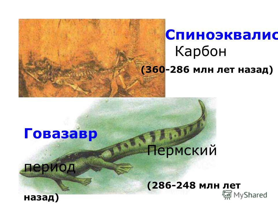 Спиноэквалис. Карбон (360-286 млн лет назад) Говазавр Пермский период (286-248 млн лет назад)