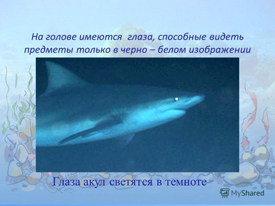 На голове имеются глаза, способные видеть предметы только в черно – белом изображении Глаза акул светятся в темноте
