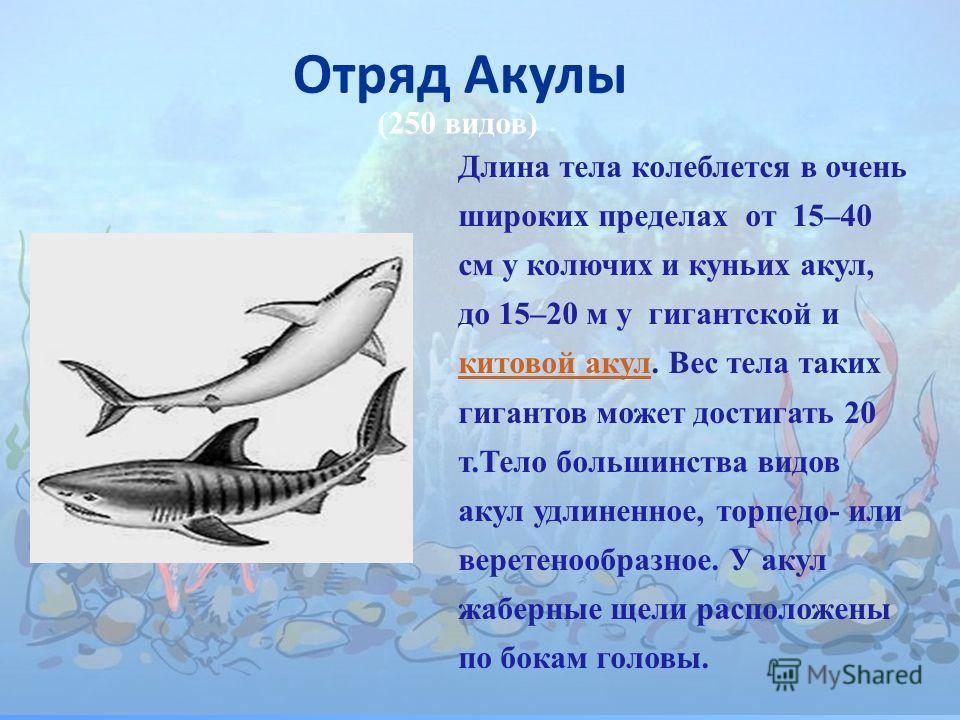Длина тела колеблется в очень широких пределах от 15–40 см у колючих и куньих акул, до 15–20 м у гигантской и китовой акул. Вес тела таких гигантов может достигать 20 т.Тело большинства видов акул удлиненное, торпедо- или веретенообразное. У акул жаб