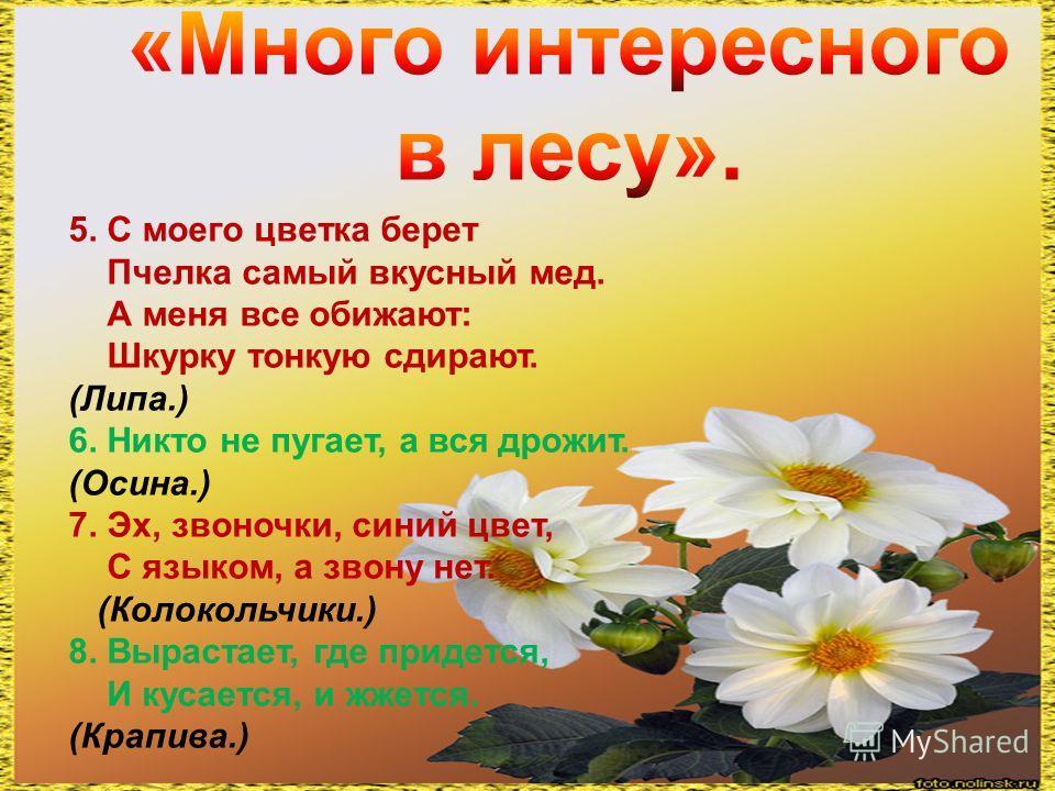 5. С моего цветка берет Пчелка самый вкусный мед. А меня все обижают: Шкурку тонкую сдирают. (Липа.) 6. Никто не пугает, а вся дрожит. (Осина.) 7. Эх, звоночки, синий цвет, С языком, а звону нет. (Колокольчики.) 8. Вырастает, где придется, И кусается