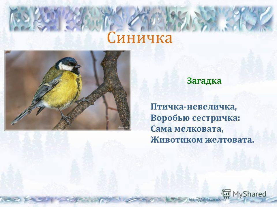 Синичка Загадка Птичка - невеличка, Воробью сестричка : Сама мелковата, Животиком желтовата.
