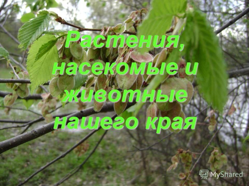 Растения, насекомые и животные нашего края