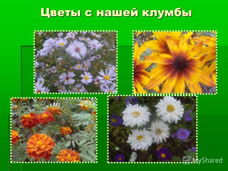 Цветы с нашей клумбы