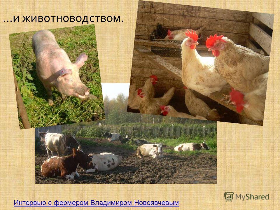 … и животноводством. Интервью с фермером Владимиром Новоявчевым