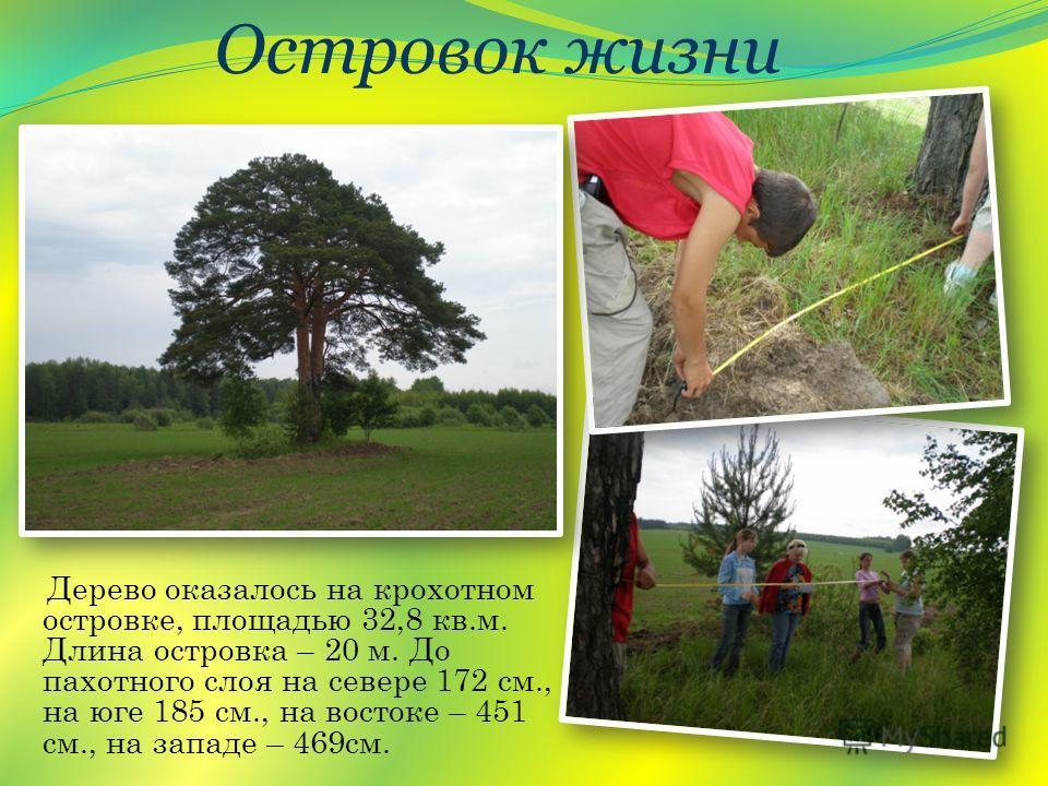Дерево оказалось на крохотном островке, площадью 32,8 кв.м. Длина островка – 20 м. До пахотного слоя на севере 172 см., на юге 185 см., на востоке – 451 см., на западе – 469см. Островок жизни