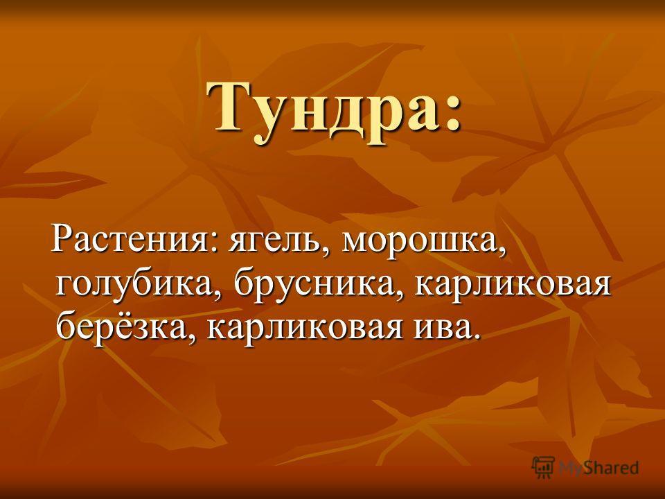 Тундра: Растения: ягель, морошка, голубика, брусника, карликовая берёзка, карликовая ива. Растения: ягель, морошка, голубика, брусника, карликовая берёзка, карликовая ива.