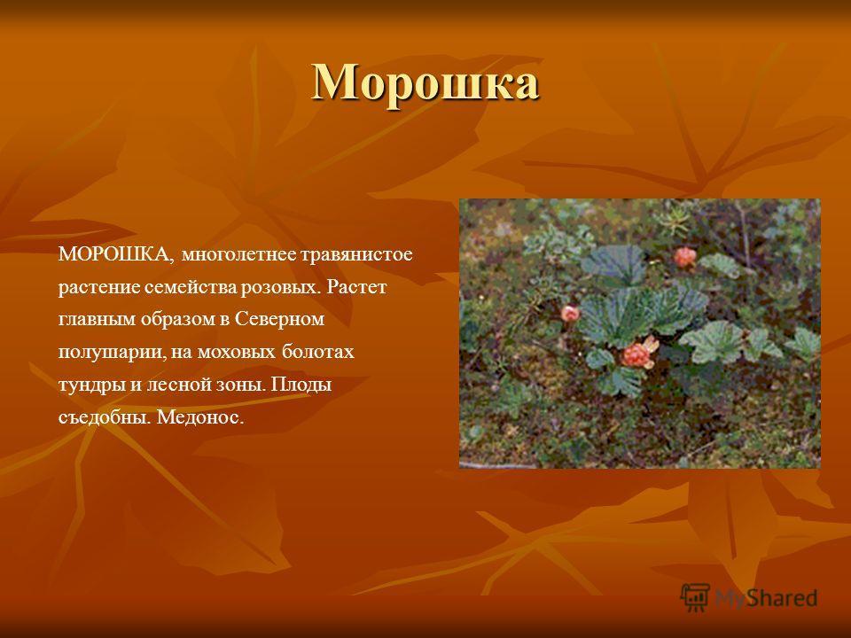 Морошка МОРОШКА, многолетнее травянистое растение семейства розовых. Растет главным образом в Северном полушарии, на моховых болотах тундры и лесной зоны. Плоды съедобны. Медонос.