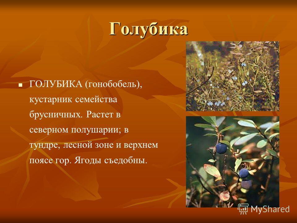 Растение тундры презентация