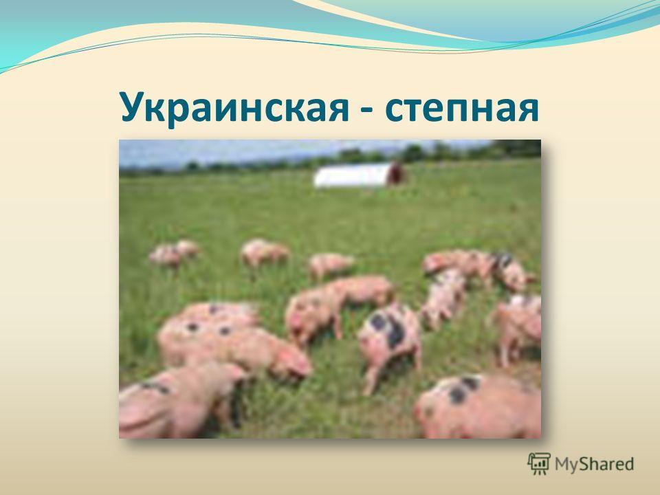 Украинская - степная