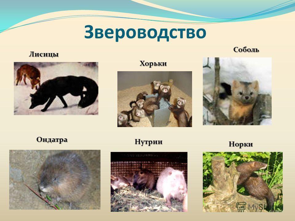 Звероводство Лисицы Соболь Хорьки Ондатра Нутрии Норки