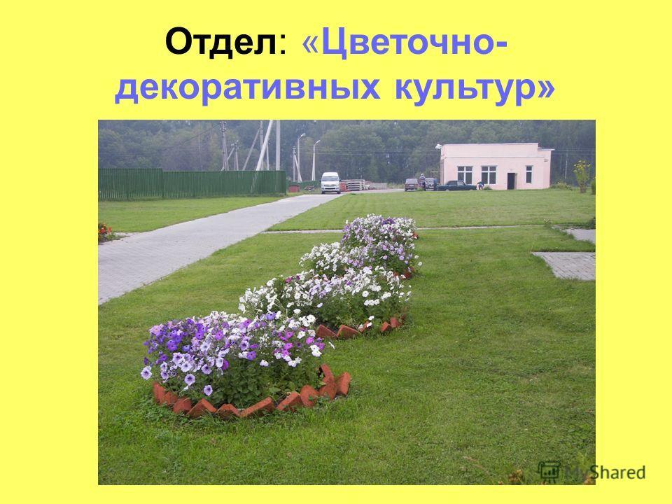 Отдел: «Цветочно- декоративных культур»