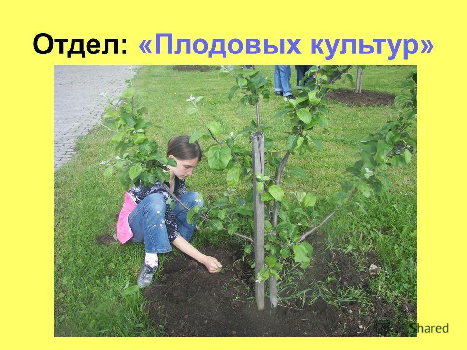 Отдел: «Плодовых культур»