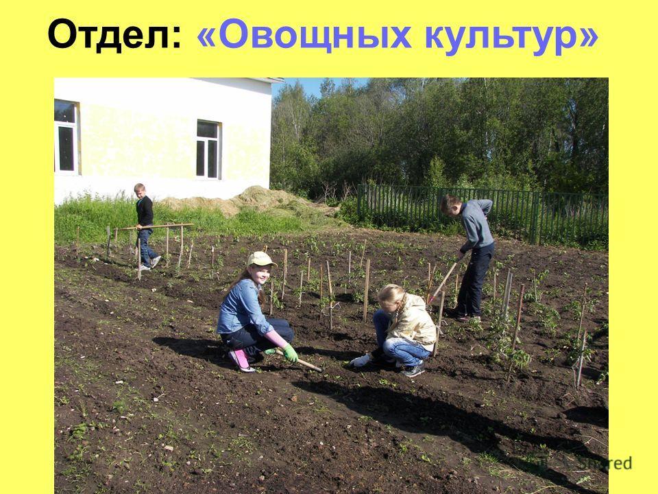 Отдел: «Овощных культур»
