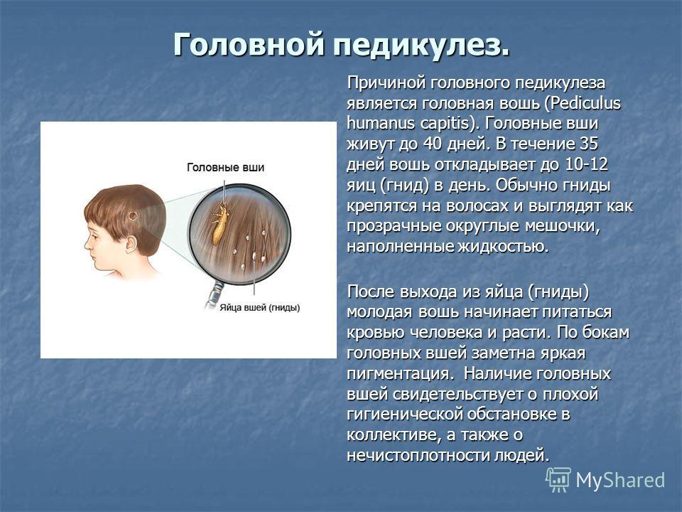 Головной педикулез. Причиной головного педикулеза является головная вошь (Pediculus humanus capitis). Головные вши живут до 40 дней. В течение 35 дней вошь откладывает до 10-12 яиц (гнид) в день. Обычно гниды крепятся на волосах и выглядят как прозра