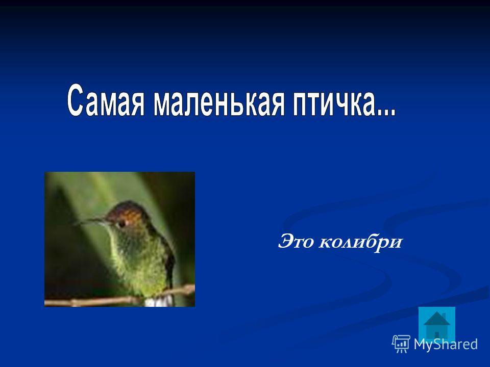 Это колибри