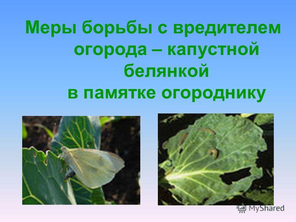 Меры борьбы с вредителем огорода – капустной белянкой в памятке огороднику