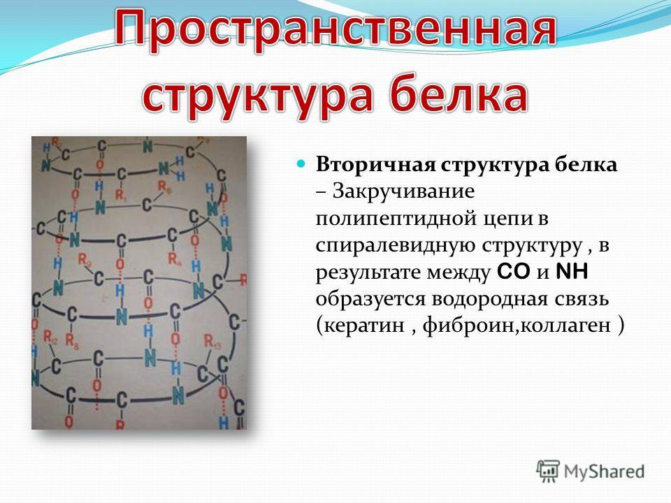 Вторичная структура белка – Закручивание полипептидной цепи в спиралевидную структуру, в результате между CO и NH образуется водородная связь (кератин, фиброин,коллаген )