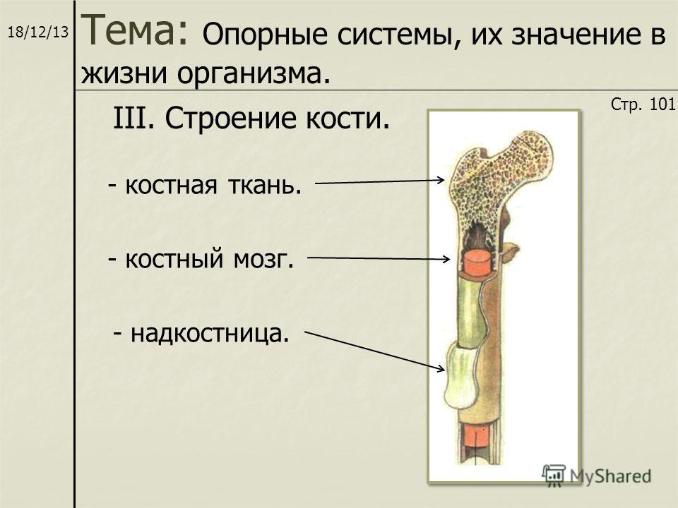 18/12/13 III. Строение кости. Тема: Опорные системы, их значение в жизни организма. Стр. 101 - надкостница. - костная ткань. - костный мозг.