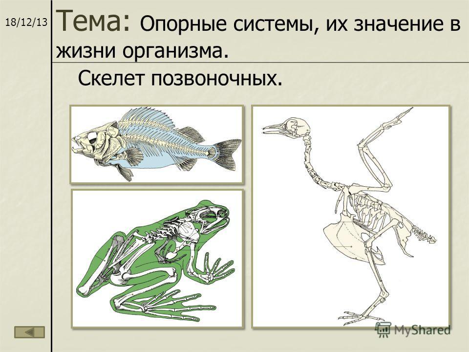 18/12/13 Скелет позвоночных. Тема: Опорные системы, их значение в жизни организма.