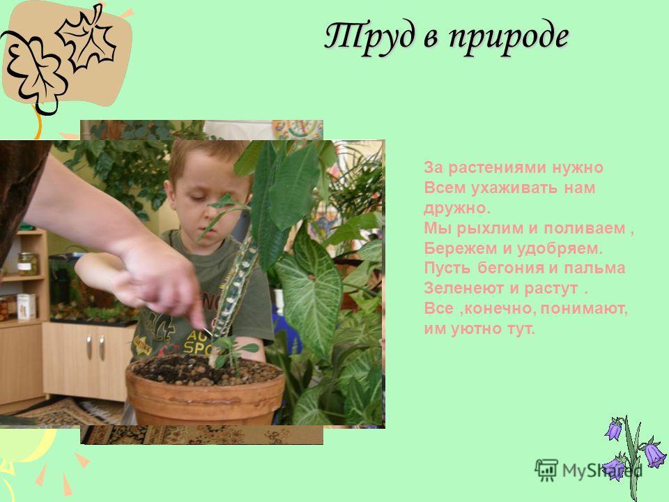 Труд в природе За растениями нужно Всем ухаживать нам дружно. Мы рыхлим и поливаем, Бережем и удобряем. Пусть бегония и пальма Зеленеют и растут. Все,конечно, понимают, им уютно тут.